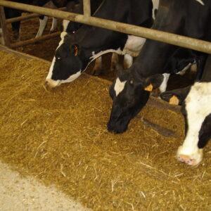 Cow Feed, Llama Feed, Etc