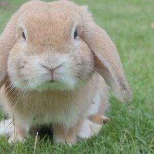 Rabbits & Small Animals